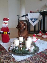 Die ersten Weihnachtsgrüße erreichen uns: Jamnik´s Florentyna