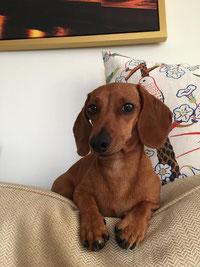 OSmilla grüßt zu Weihnachten