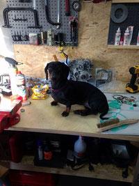 Irish June hilft in der Werkstatt
