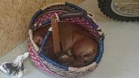 Während  Iam Buddy Holly im Einkufskorb schläft