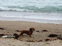 Miss Paula Marple sendet Urlaubsgrüße