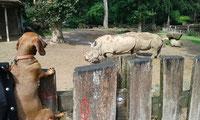 Florentyna ist im Tierpark unterwegs