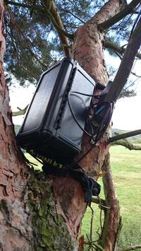 Batlogger stationär in einer Kiefer installiert