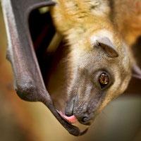 bats for kids,
