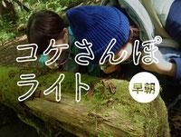 奥入瀬渓流コケさんぽライト(早朝)