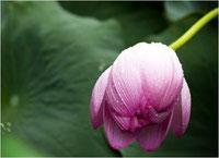 Wohltuende Tiefenentspannung und Erholung begleiten eine individuelle Reiki-Behandlung.