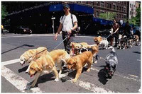 Dog Walkers in New York.