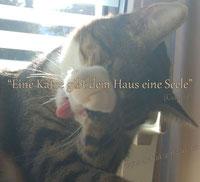 Catsitting, Mobile Katzenbetreuung, Catsitter & Gassiservice, Tiertaxi - Saarland - Nonnweiler, Wadern, St. Wendel, Weiskirchen, Tholey, Losheim,