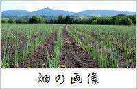 スリーエフ農法の無農薬野菜 畑