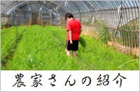 スリーエフ農法の無農薬野菜 農家さん