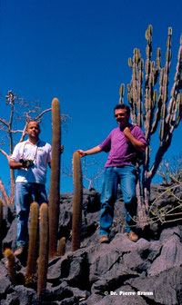 Siccobaccatus estevesii (l) & Cereus pierre-braunianus (r), Goiás 1998