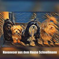 Kosten Schnellmanns Havanesers Webseite