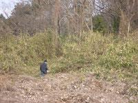 平成25年1月の写真です。原野でした
