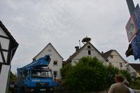 Störche Wabern - www.weissstorch-wabern.de