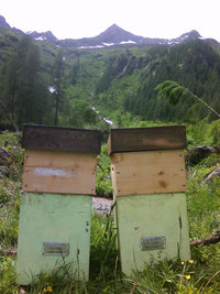 two small hives
