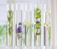 Reagenzgläser mit Blumen