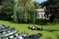 Les barques d'un embarcadère parmi d'autres dans le Marais poitevin. Des canaux recouverts de lentilles vertes à l'ombre des arbres