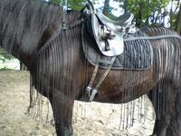 Ausreiten Fliegendecke Fliegenschutz Pferd Reiten Brustlatz Vorderzeug Krämer Wanderreiten Fliegennetz