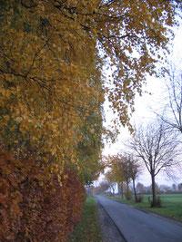 Weg zur Weide im Herbst