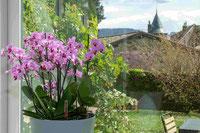 arrosage automatique orchidée en pot avec OriCine® :  astuce en cas d'absence