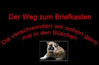 Continental Bulldog Welpen und Züchter