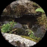 Steinkraftinfo Giuseppe Vogler Luzern Meggen Schweiz Wein Wasser vitalisieren energetisieren beleben veredeln Kraft der Steine Weinwunder Wassersegen
