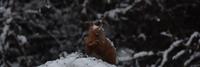même l'écureuil nous honore d'une petite visite gustative...