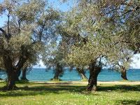 Tai Chi und Qi Gong Ferienkurs, Ferienseminar im Olivenhain am Meer in Griechenland, Pilion - Karina Berg