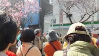 関内桜通り街燈