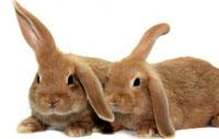 Kaninchen Impfwochen im April