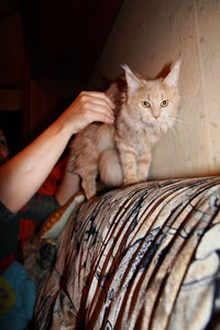 Какие поглаживания кошке приятны.