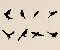 Birds set of eight stickers