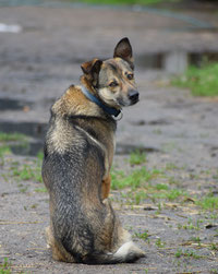 Tierphysiotherapie Tierchiropraktik Tanja Mußbach Föhrden-Barl