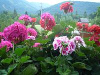 Blumenpracht am Urlaubsbauernhof in St.Wolfgang