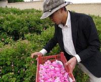 イラン山奥のバラ畑。生産現場を見てくる事は重要