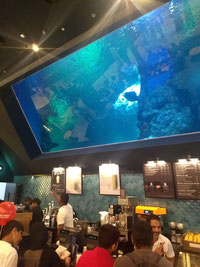 Starbucks at the Oman Aquarium, Muscat, Oman