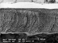顕微鏡で見たMCPETの断面