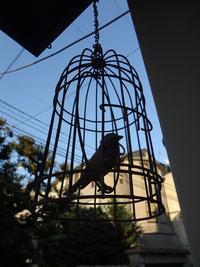 貝の小鳥 入口の小鳥