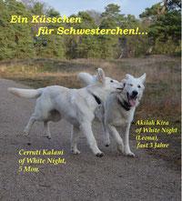 Kalani(C-Wurf) mit Leona (A-Wurf)