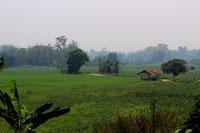 Panoramen von Reisfeldern säumen Ihre Rundreise durch Nordthailand.