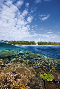 Lady Elliot Island, Australia's Nature Coast