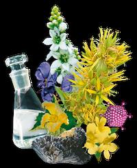 Die Bestandteile von metavirulent