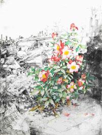 """""""Rose von Rojava"""", Kohle, Stifte und Aquarell auf Papier, 61 × 46 cm, 2020"""
