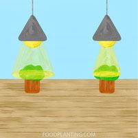 PPFD, stralingshoek, kweeklamp