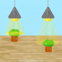 PPFD, afstand, kweeklamp