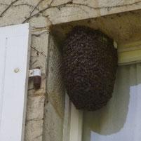 Un essaim à la fenêtre par miel et goûter d'antan 79