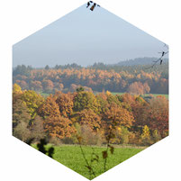 Heuvels nabij Vielsalm