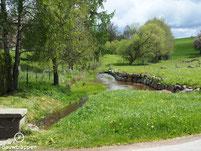 Bizons nabij Sint-Maria-Horebeke