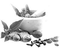 conseil en nutrition et hygiène de vie