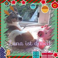 wir wollen Celal auch eine kleine Weihnachtsfreude machen :)